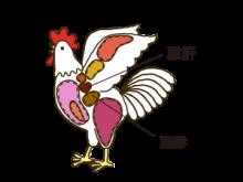雞胗・雞肝