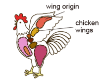 Wing origin , chicken wings